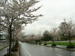 2008.04.28-05.jpg