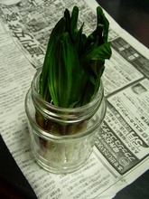 2008.04.02-02.jpg